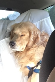 The nap after the hike